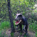 Динозавры в парке